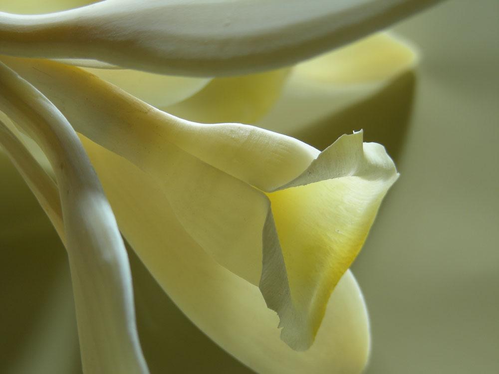 Vanilleblüte Häagen Dazs